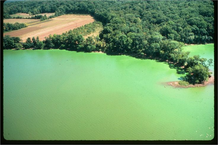 17 Best Images About Algae Blooms On Pinterest