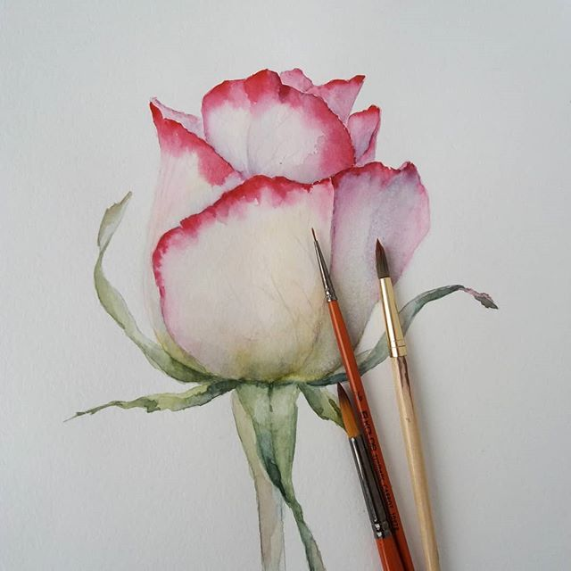 Watercolor. Rose. #watercolor #watercolorpainting#floral#flowers#lora_oblovatnaya#botanical