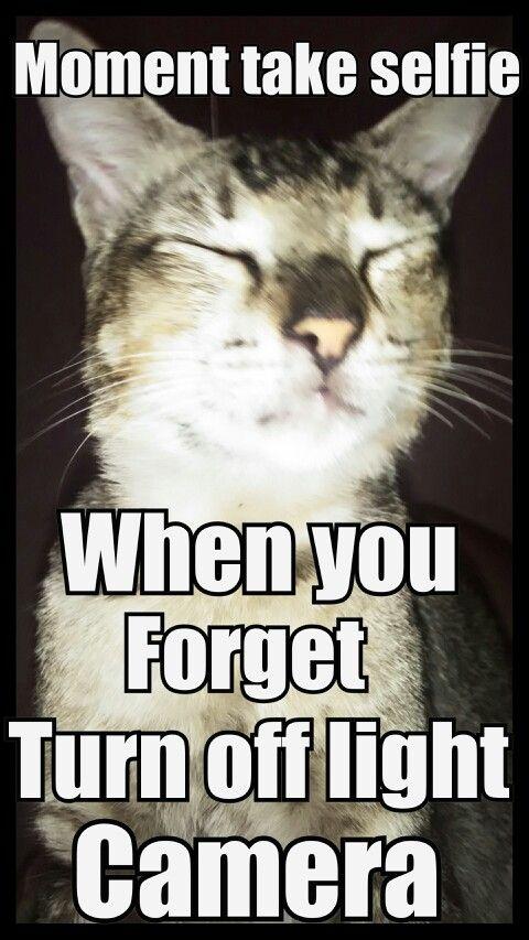 I try make meme use my cat hehe