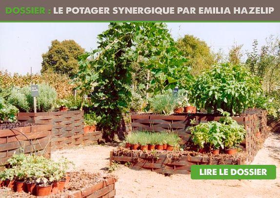 La gestion d'un potager peut se faire sans effort, dans le respect de la nature et des synergies entre le terrain et les plantes, même si c'est difficile à croire. L'agriculture synergique est une méthode de culture révolutionnaire élaborée à partir des années 80 par MmeEmilia Hazelip, une agricultrice espagnole qui a adapté au climat …