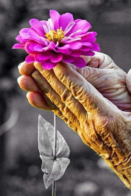 .Beijar a  mão  da vo