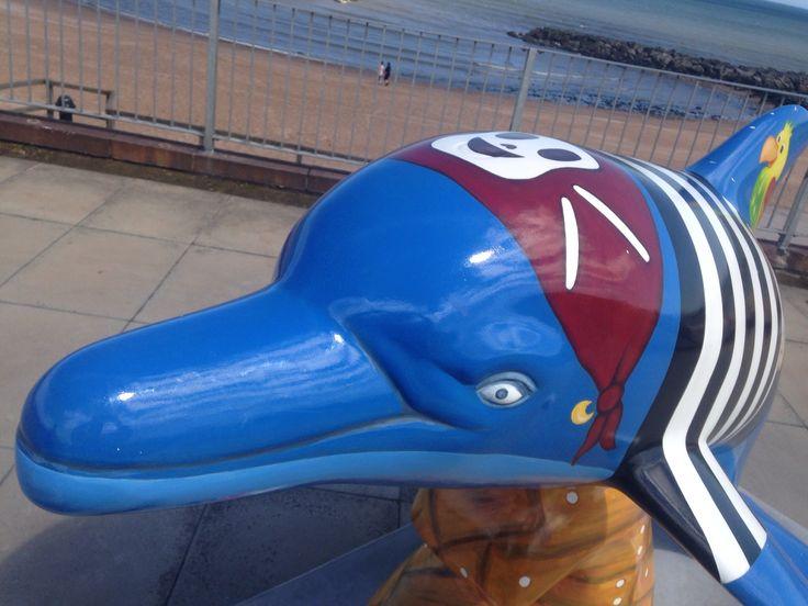 Aberdeen wild dolphins