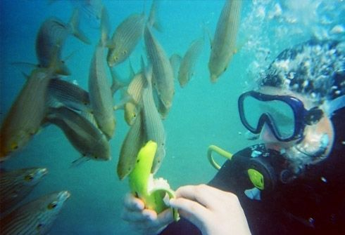 Underwater sightseeing - http://canaryislands.hot-travels.com/underwater-sightseeing/