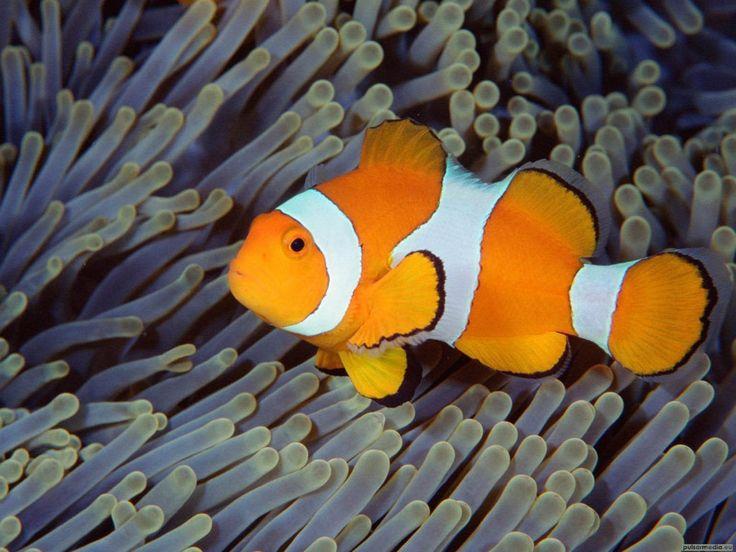 Kleurrijke vissen - achtergronden voor je desktop: http://wallpapic.nl/oceaan-en-zee/kleurrijke-vissen/wallpaper-11469
