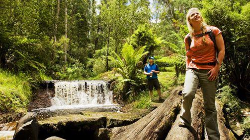 Walking, Gippsland, Victoria, Australia