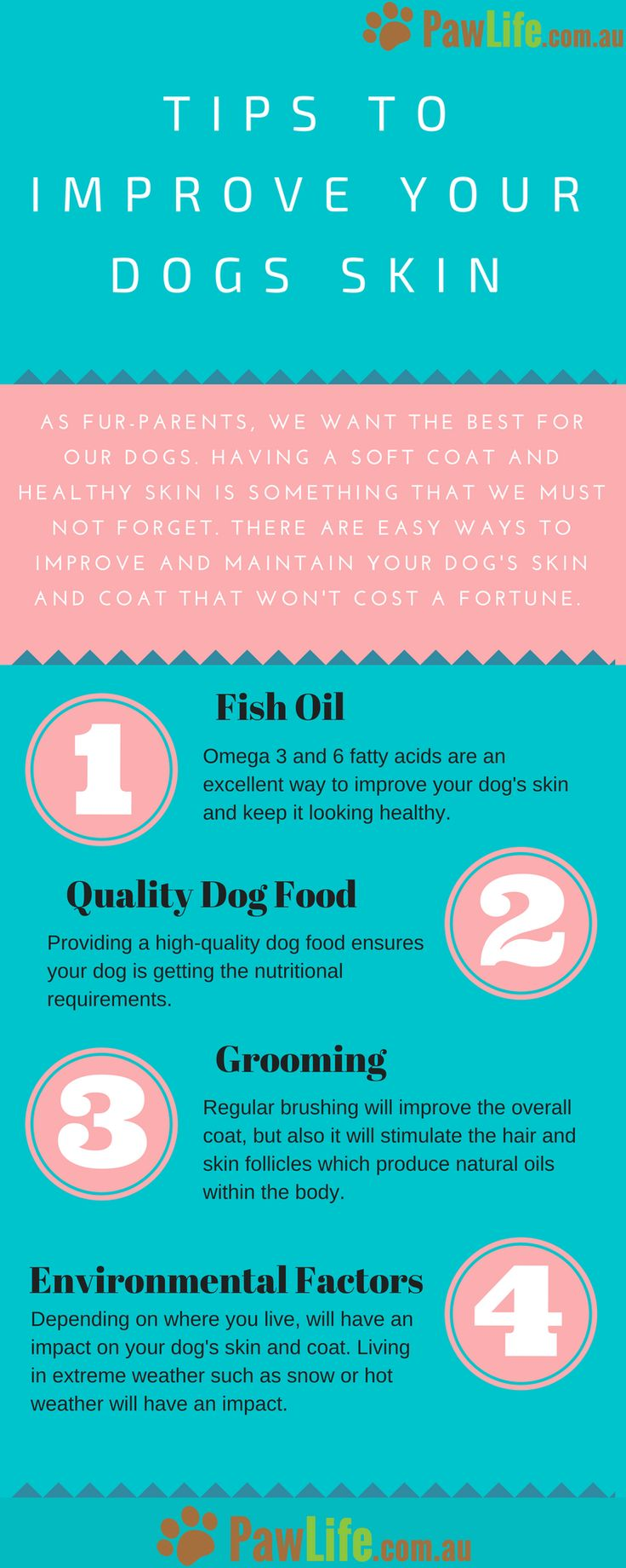 There are easy ways to improve your dog's skin and coat that won't cost a fortune.