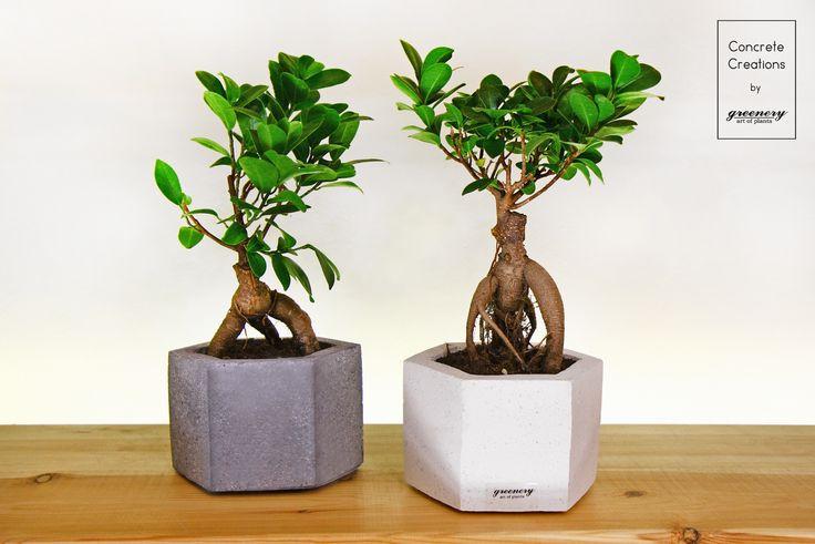 Concrete pot with bonsai #greenery #concrete #plants #bonsai #greece