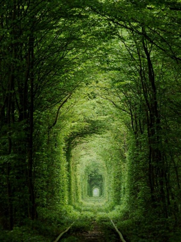 Heavily forested Train track in Ukraine - The Tunnel of Love - Thought the Shot was awesome.
