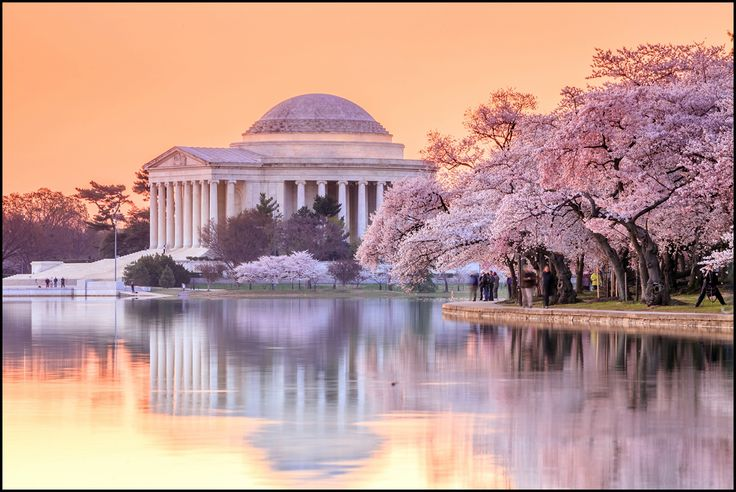 Washington, D.C. - The annual cherry-blossom festival is a rite of spring in which the white marble monuments of our nation's capitol reflect the cheery pink blossoms exploding around them.