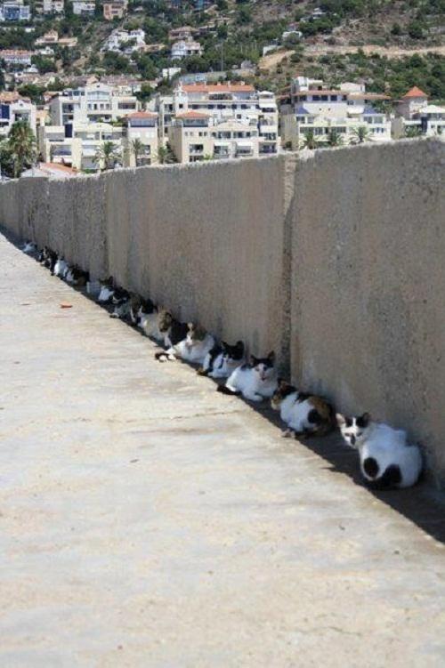 Soooooo sad a bunch of strays