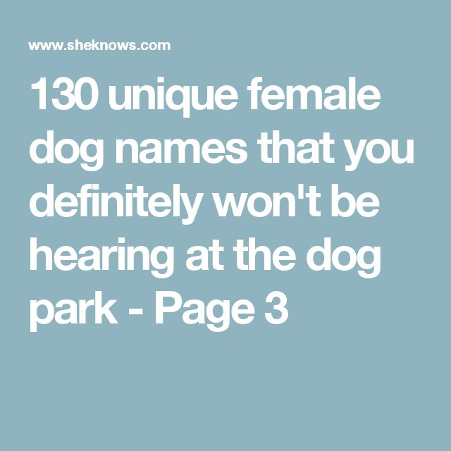 130 unique female dog names that you definitely won't be hearing at the dog park - Page 3