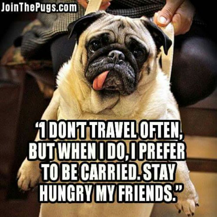 Our latest #PugPost is out and barking! Click the pin for #cuteness!