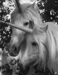 soz I <3 Unicorns
