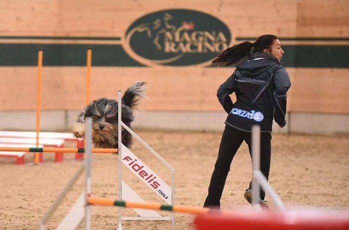 #CleanIngredients  Forza10 al World Agility Championship IFCS #dogs #cats