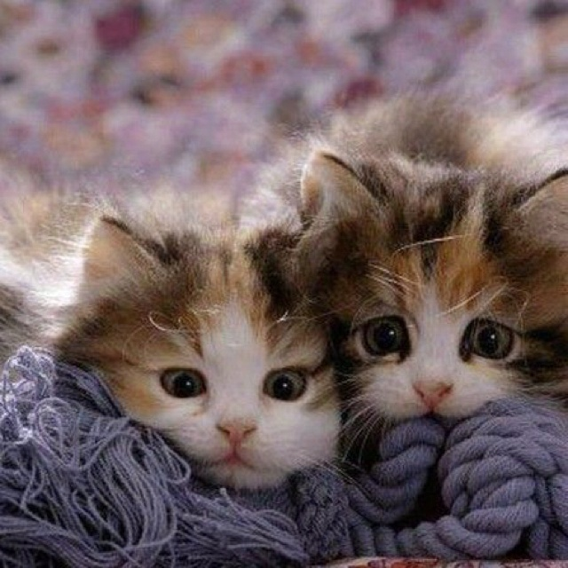 Adorable: Cats, Kitty Cat, Animals, Sweet, Pet, Kitty Kitty, Kittens, Eye