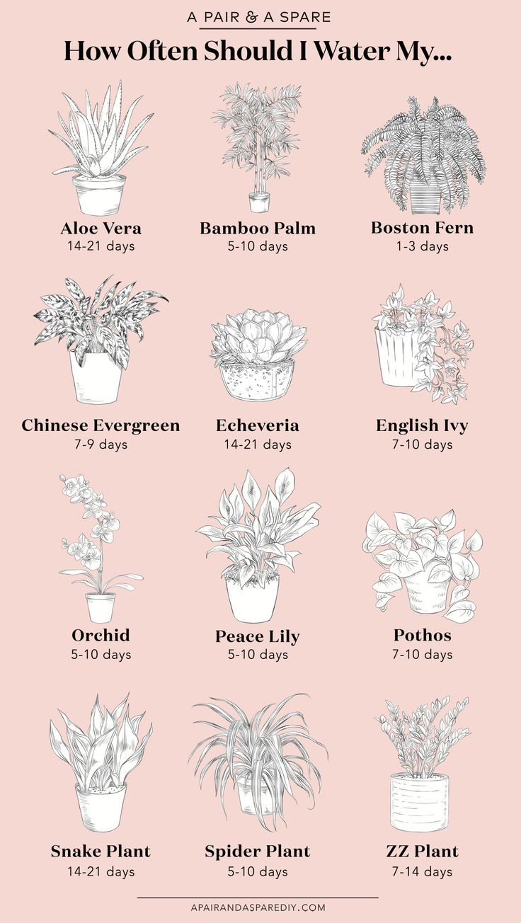 Wie oft sollte ich meine Pflanzen gießen?