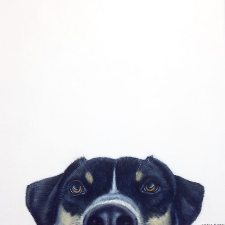 """""""Boy - Can I come too?"""" Original oil on canvas pet painting by Charles Hannah. Quirky animal art."""