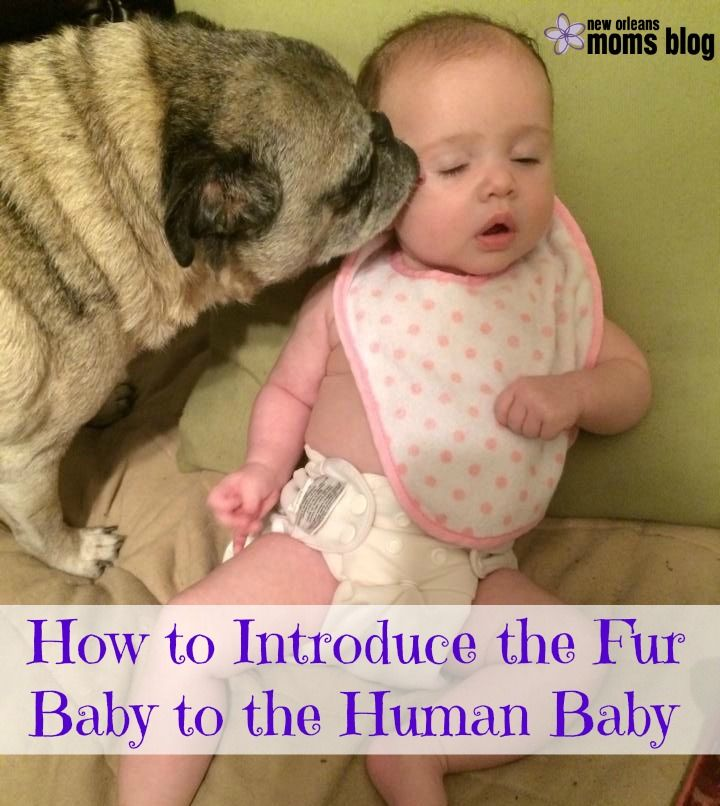 I say that I'm a first time mom, but really, I had six babies already. They just happen to be of the furry, canine variety. You don't need to go back and check. I really said six. To answer your qu...