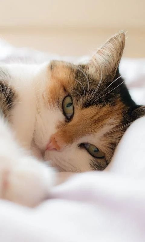 Best House Cats That Coexist With Dogs