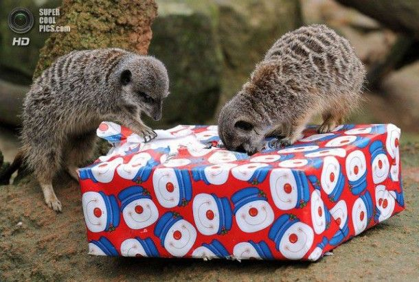 Pictures – Christmas in Zoo With Lovely Animals