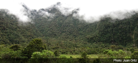 UNESCO adds Colombia's coffee region to World Heritage List | Colombia Reports