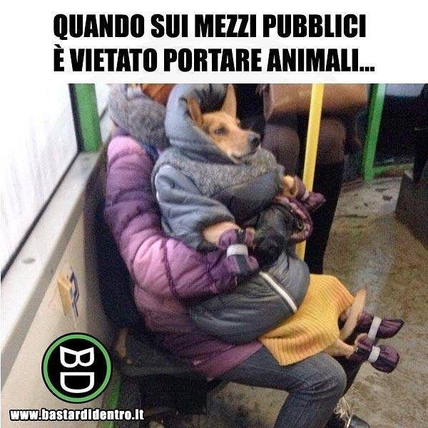 Camuffamento perfetto! #bastardidentro #animali #cane