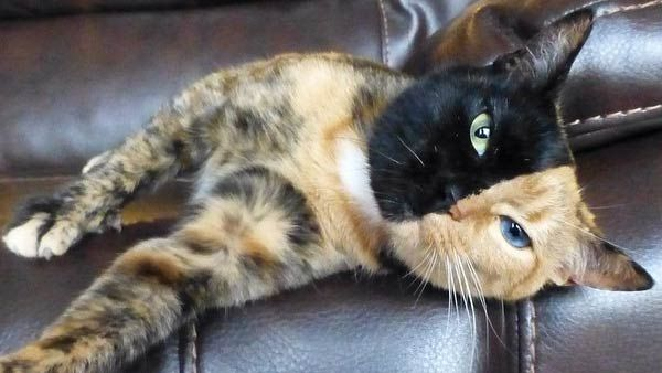 WJHL.com - Venus the cat appears to have 2 faces