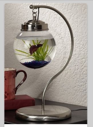 10 best images about fish bowls for norman on pinterest for Cool fish bowls