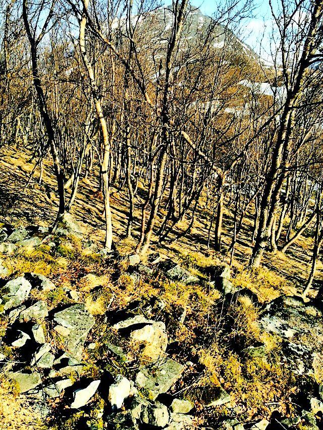 Travel Mountain Hike Norway