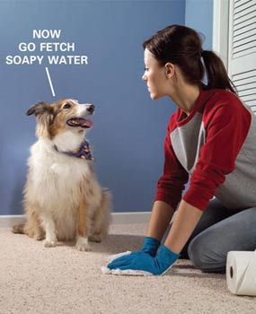 Carpet Cleaning Tips For Pet Owners Carpets Stains And