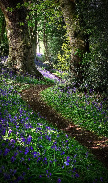 Peaceful forest in Derbyshire, England • Matt Oliver photography on Flickr.