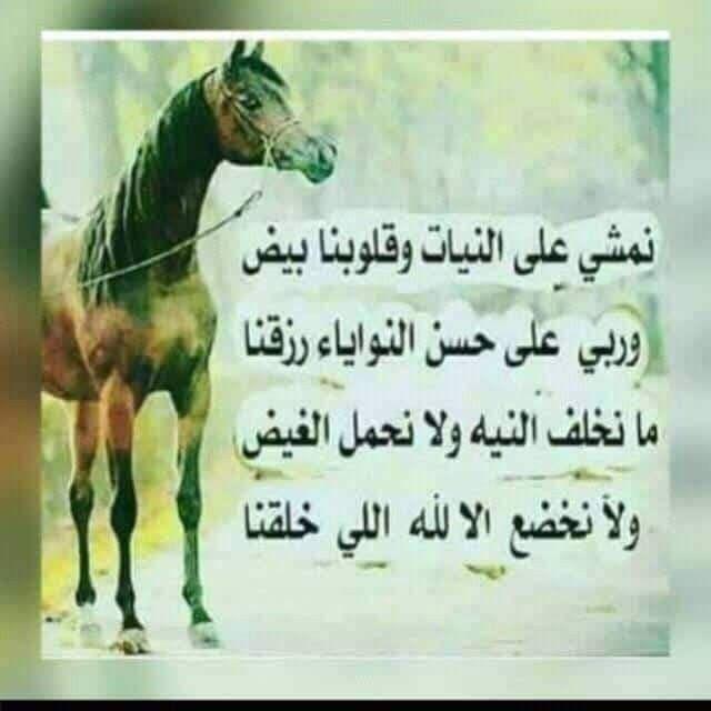 Pin By فلسطينية ولي الفخر On مما راق لي Quotes Horses Animals