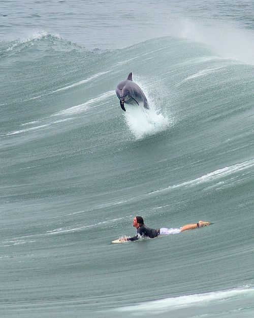 Nothing like nature. #surf #dolphin