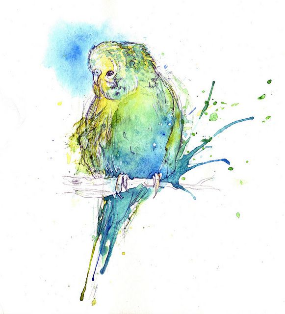 Budgie Watercolor