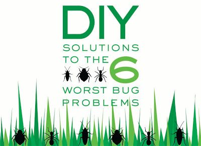 Get Rid Of Roaches- Combine 2 cups borax, 1/2 cup sugar, 1/2 cup chopped onion, 2 tablespoons cornstarch, and 2 tablespoons water in a bowl, then roll into small balls. Place three balls into an unsealed sandwich bag and place the bags wherever your roach problem exists. Remember, though, that the roach balls are poisonous; be sure to place them where kids and pets can't reach them.