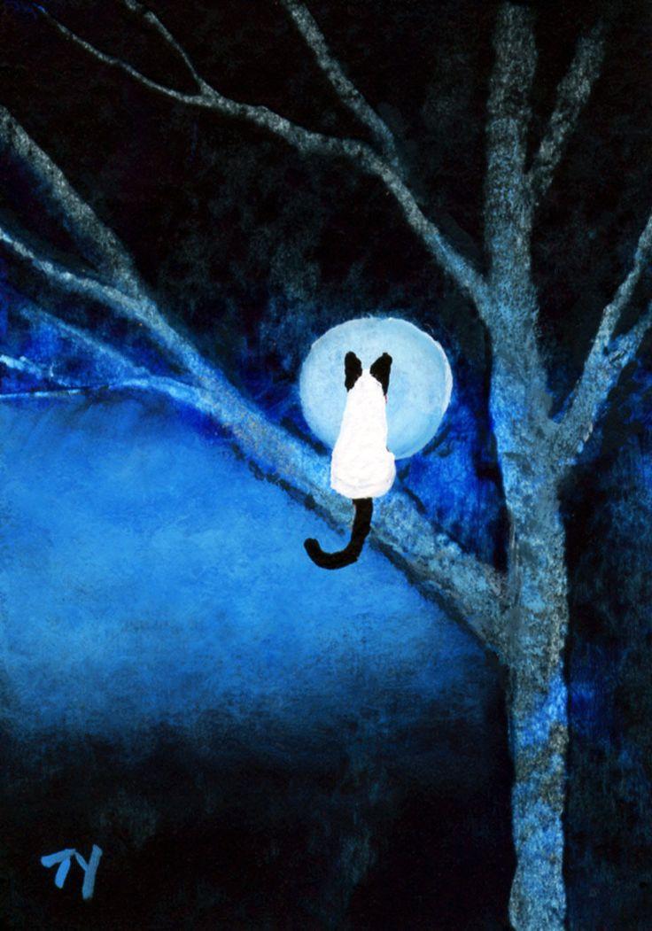 Siamese Cat Moon Tree ACEO Folk Art PRINT of Todd Young ...