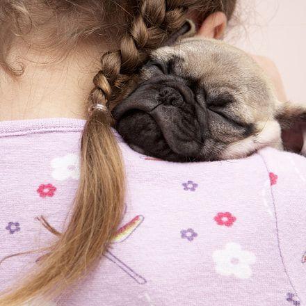 Make Massive Change To Your Pug´s Behaviour in Just 1 Day! - Pug #pug #puglife #pugsofinstagram #pugs