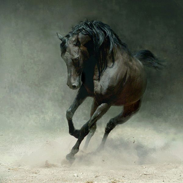 Love horse photography.: Hors Tattoo, Beautiful, Hors Pictures, Favorite Animal, Wojtek Kwiatkowski, Photo, Wild Hors, Black Hors, Arabian Horses