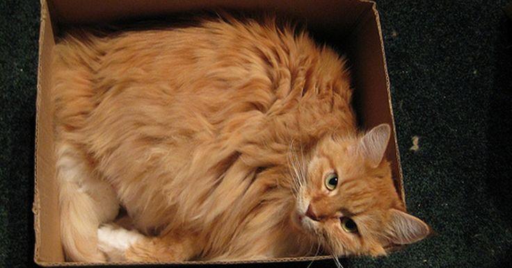 ¿Por qué mi gato se acuesta en su caja de arena?. Si descubres que su gato se recuesta en su propia caja de arena, puede que pienses que ha perdido la cabeza. Sin embargo, desde el punto de vista del gato, puede tener buenas razones para merodear por este lugar inusual.