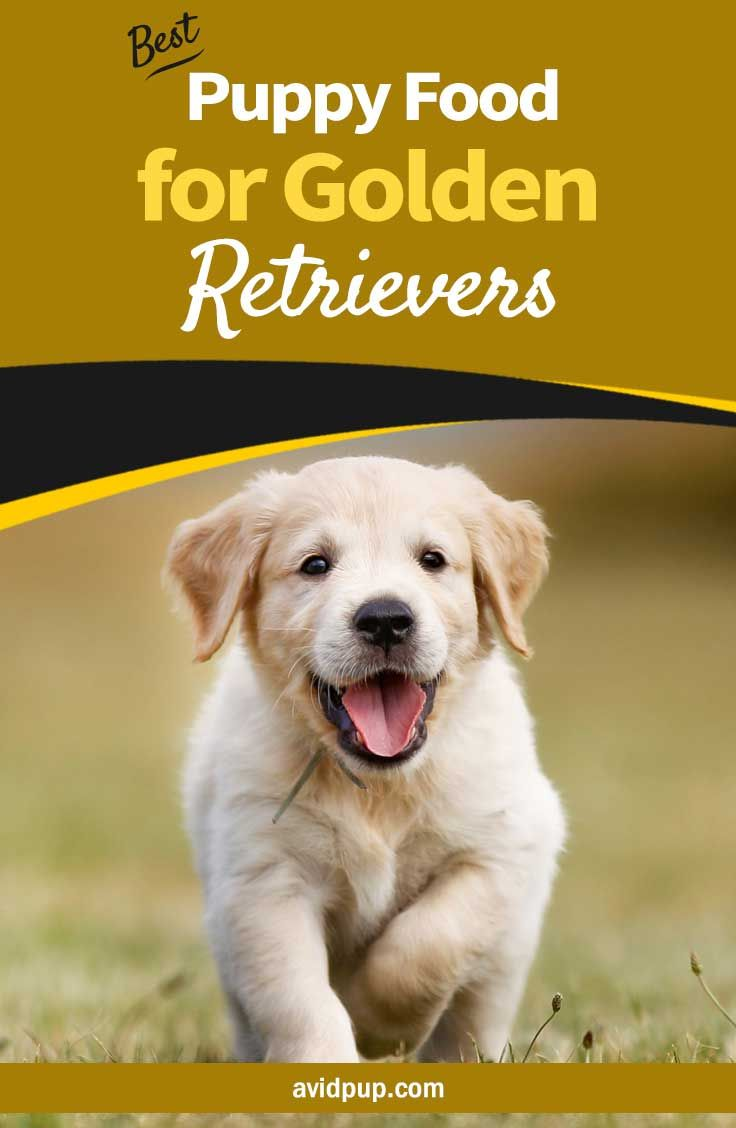 Best Puppy Food For Golden Retrievers 7 Top Picks Dogfood
