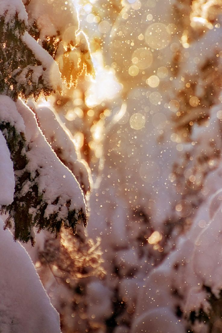 snowy trees + sunrise