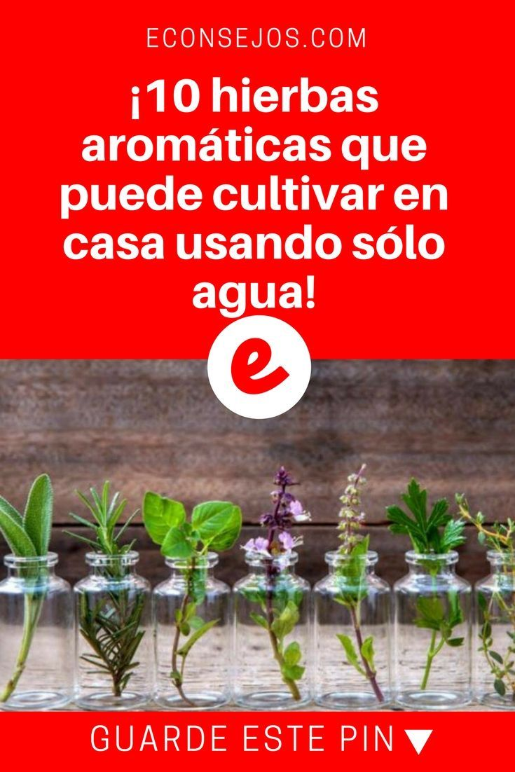 22++ Cuidado de hierbas aromaticas inspirations