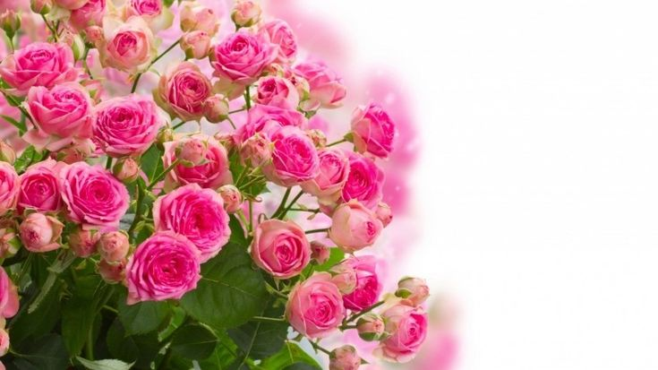 Pink Roses Bouquet Wallpaper flo