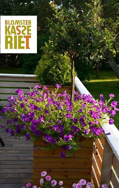 Isolerte blomsterkasser fra Blomsterkasseriet. 2 stk 50x50x70cm LBH. På veranda