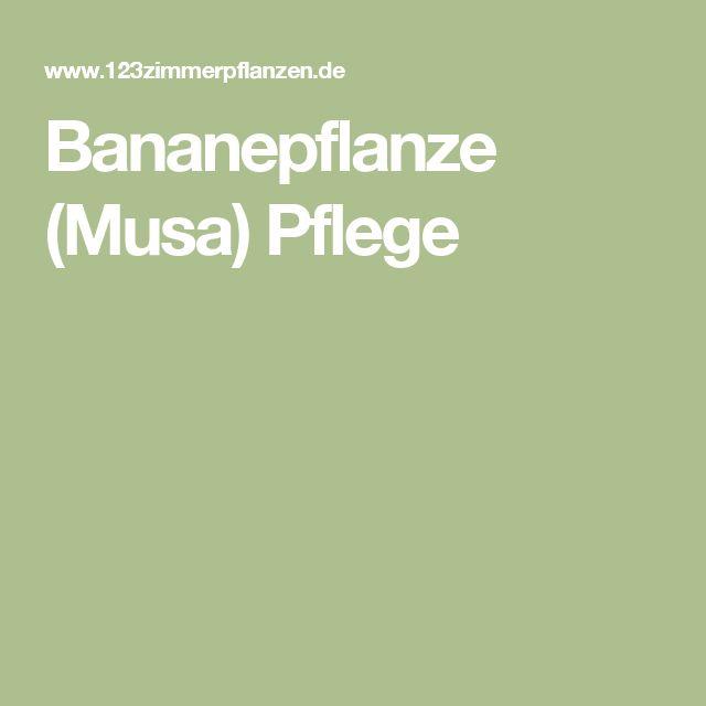 Bananepflanze (Musa) Pflege