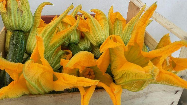 Fiori di zucchine!!