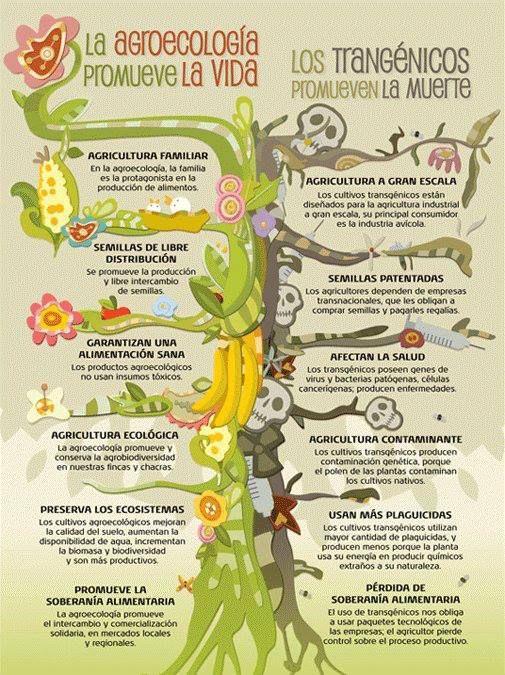 Mucho mejor el consumo de agricultura ecológica ¿verdad? ¿Sabías que nuestro país es uno de los mayores productores de productos ecológicos y de los que menos la consumen? ¿ . . . . ?