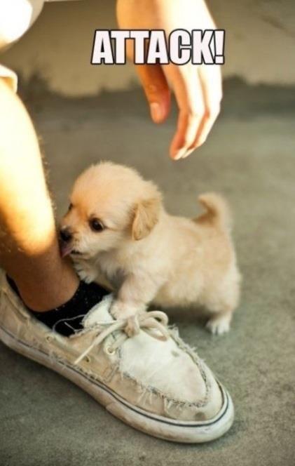 Alguien que me diga si hay un momento más tierno y más enriquecedor que cuando recibes todo el amor de tu perro... Priceless!
