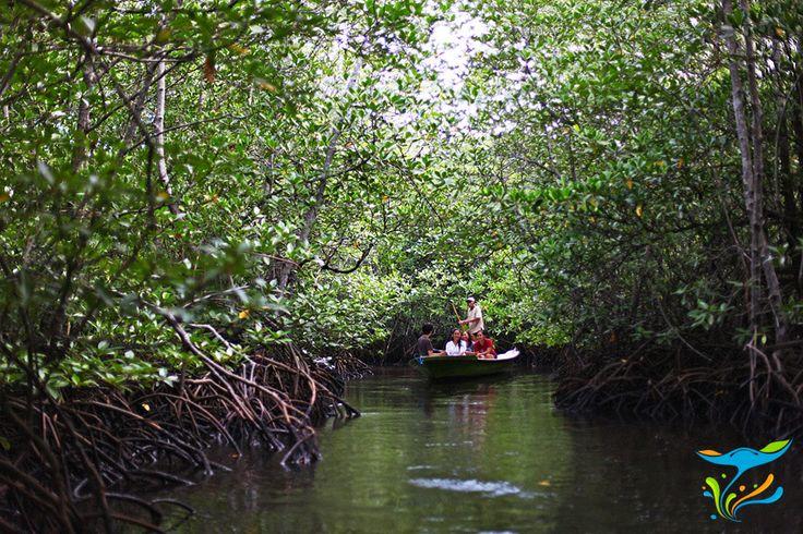 Suasana hutan bakau yang teduh dan tenang, biasanya hanya terdengar suara burung dan kecipak air terkena dayung.