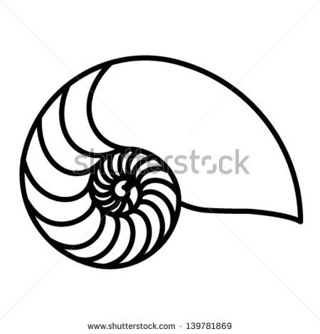 Vector Nautilus Shell Free Vector Download 189 Free Vector For